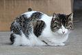 Cat 9541 (9501463244) (3).jpg