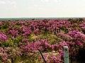 Cenizos floreados - panoramio.jpg