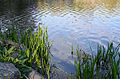 Central Park New York May 2015 003.jpg