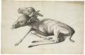 Cervus africanus - siamese tweeling - 1700-1880 - Print - Iconographia Zoologica - Special Collections University of Amsterdam - UBA01 IZ21600025.tif
