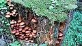 Champignons en Vanoise (2).jpg