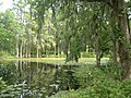 Charleston South Carolina-Cyprus Lake at Middleton Place Plantation-20060430153638.jpg