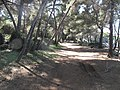 Chemin de la batterie (Sainte-Marguerite island).jpg