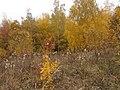 Cherkas'kyi district, Cherkas'ka oblast, Ukraine - panoramio (346).jpg