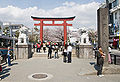 Cherry-Blossoms-Dankazura-Kamakura.jpg