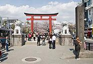Cherry-Blossoms-Dankazura-Kamakura