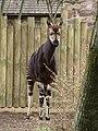 Chester Zoo (9487349224).jpg