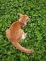 Chiang Mai kitties - 2017-07-09 (009).jpg