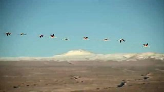 File:Chile Travel- Atacama - Promotional video.ogv
