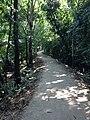 Choto Gourichanna, Phuljhury, Barguna - panoramio (2).jpg