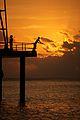 Christmas Island (5774554617).jpg