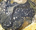 Clast-rich impact pseudotachylite (Sudbury Breccia, Paleoproterozoic, 1.85 Ga; Windy Lake Northwest roadcut, Sudbury Impact Structure, Ontario, Canada) 8 (47736051751).jpg