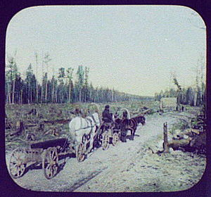Trans-Siberian Railway - Clearing on the right-of-way of the Eastern Siberian Railway, 1895