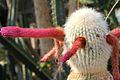 Cleistocactus strausii pm.jpg