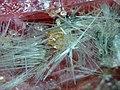 Clino-suenoite, Rhodonite, Spessartine-653671.jpg