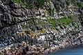 Coastline St John Newfoundland (40469638435).jpg