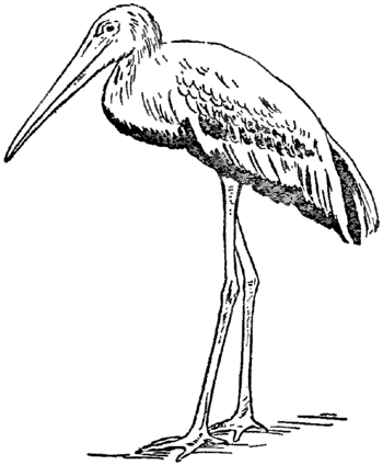 Collier's 1921 Stork - Indian Wood Stork.png