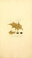 Coloured Figures of English Fungi or Mushrooms - t. 317.png