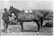 Comanche in 1887