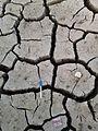Common mudcrack.jpg