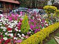 Connoor flowers site 01.jpg