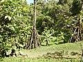Costa Rica DSCN3172 (30308887014).jpg