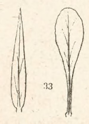Coste - Flore descriptive, tome 1 (page 57 crop fig 33).jpg