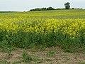 Costock fields - geograph.org.uk - 1331615.jpg