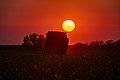 Cotton harvester at sunset with dark orange sky in Batesville, Texas cotton field.jpg