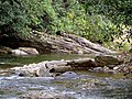 Creek Black Mountain Campground Pisgah Nat Forest NC 4423 (37894593066).jpg