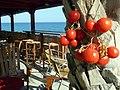 Creta-Kalamaki - panoramio - Imatges, algunes lle….jpg
