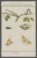 Crocallis - Print - Iconographia Zoologica - Special Collections University of Amsterdam - UBAINV0274 058 01 0044.tif