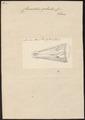 Crocodilus galeatus - kop - 1700-1880 - Print - Iconographia Zoologica - Special Collections University of Amsterdam - UBA01 IZ12200084.tif