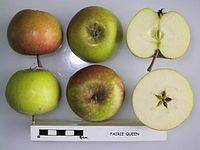 Cross section of Fairie Queen, National Fruit Collection (acc. 1944-018).jpg