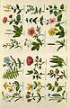 Culpeper's complete herbal BHL4747050.jpg