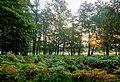 Dülmen, Wildpark -- 2015 -- 8835-41.jpg