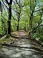 DE NRW Muenster Wolbecker-Tiergarten003.jpg