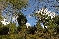 Darjeeling, India, Trees in the forest near Darjeeling.jpg