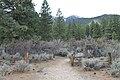 Davis Creek Park - panoramio.jpg