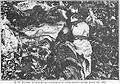Dead sucklings in the Armaganska Valley 1913.jpg