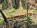 Degradação Florestal Amazônia 35.jpg