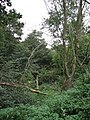 Dense vegetation - geograph.org.uk - 568959.jpg