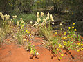 Desert grass & bush 03.jpg