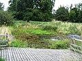 Dew Pond - Wandlebury - geograph.org.uk - 1146233.jpg