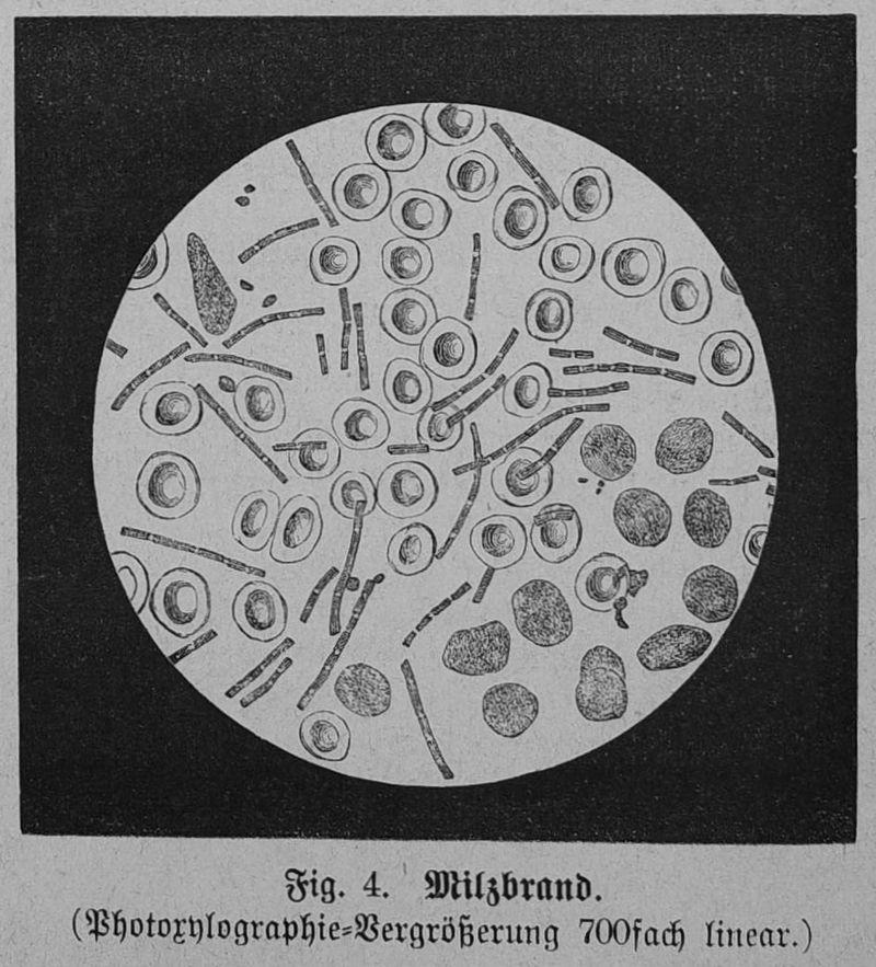 Die Gartenlaube (1879) b 064 2.jpg