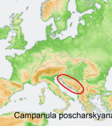 Distribution map Campanula poscharskyana.png