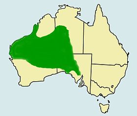 Distribution of pogona minor.jpg