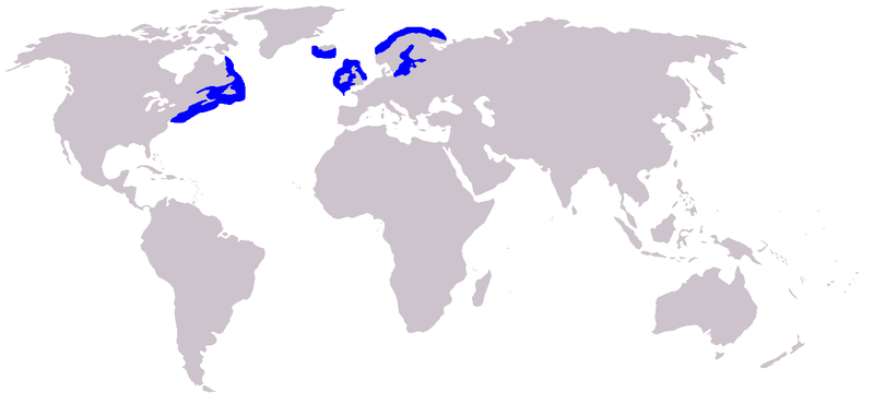 Distribution of the grey seal