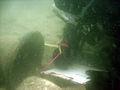 Diver&shipsbell.jpg