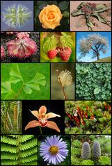 Živé prírodniny - rastliny